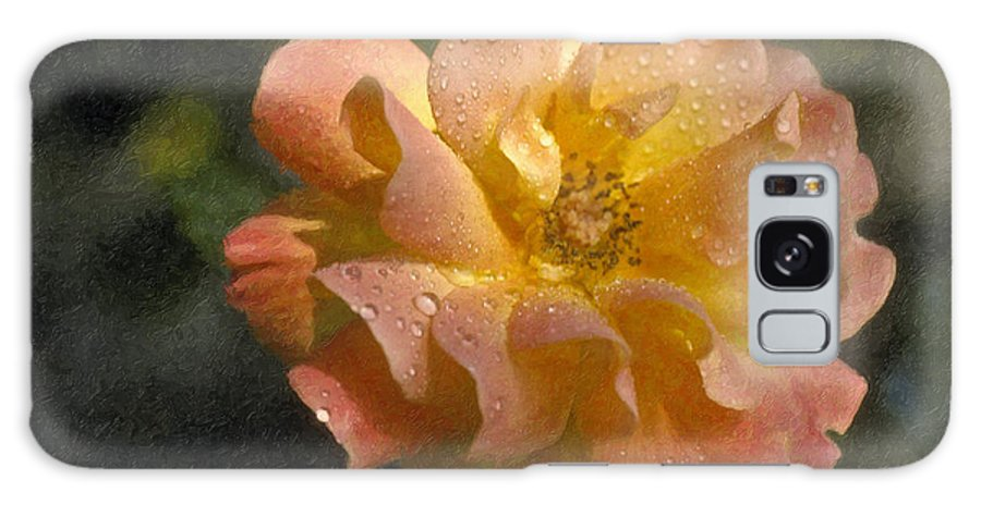 Bridal Pink Yellow Galaxy S8 Case featuring the photograph Bridal Pink Yellow Hybrid Tea Rose Genus Rosa by David Zanzinger
