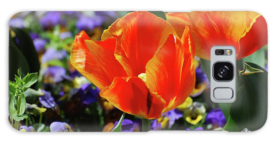 Tulip Galaxy S8 Case featuring the photograph Bright And Colorful Orange And Red Tulip Flowering In A Garden by DejaVu Designs