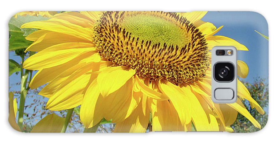 Sunflower Galaxy S8 Case featuring the photograph Bright Sunny Happy Yellow Sunflower 10 Sun Flowers Art Prints Baslee Troutman by Baslee Troutman
