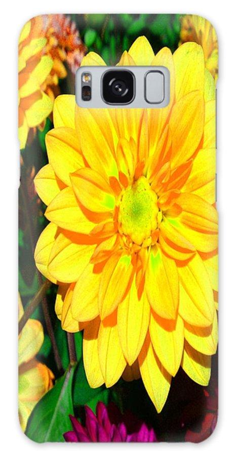 Bright Yellow Dahlia Flower Galaxy S8 Case featuring the photograph Bright Yellow Dahlia Flower by Gary Simmons
