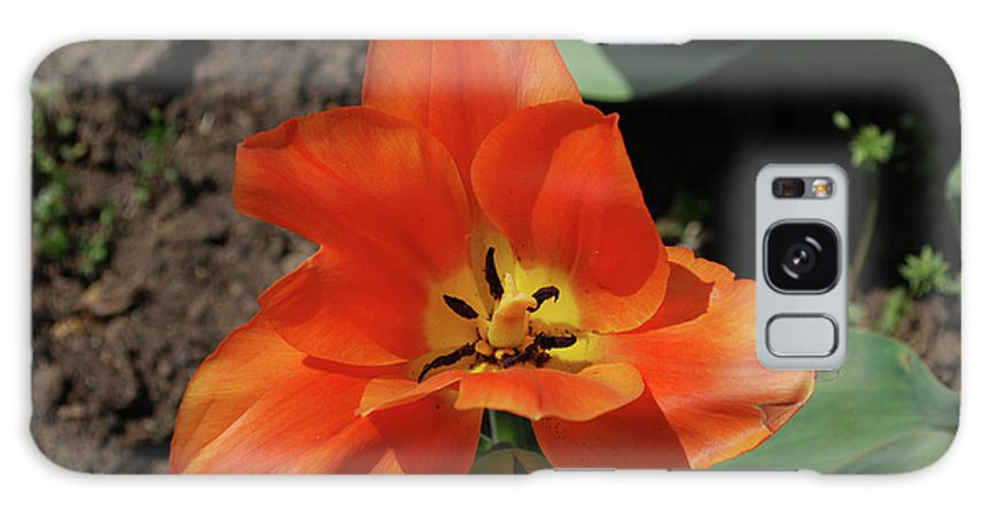 Tulip Galaxy S8 Case featuring the photograph Brilliant Orange Tulip Flower Blossom Blooming In Spring by DejaVu Designs