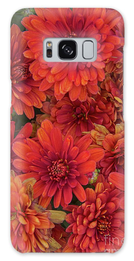 Flowers Galaxy S8 Case featuring the photograph Bronze Chrysanthemums by Regina Geoghan