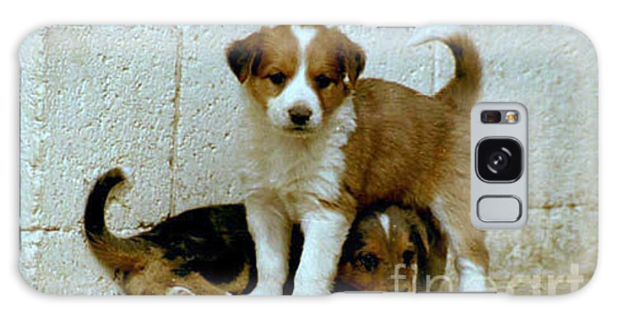 Puppies Galaxy S8 Case featuring the photograph Brothers by Kathy McClure