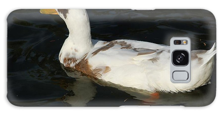 Bird Galaxy Case featuring the photograph Brown And White Duck by D Nigon