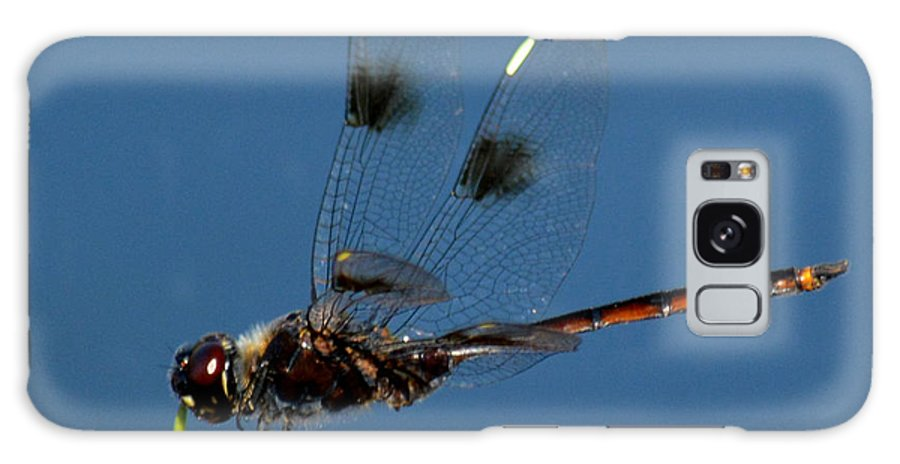 Dragonfly Galaxy S8 Case featuring the photograph Brown Dragonfly Hanging On by Reva Steenbergen
