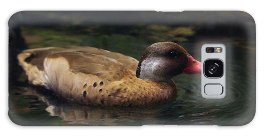 Duck Galaxy Case featuring the photograph Brown Duck by Kenna Westerman