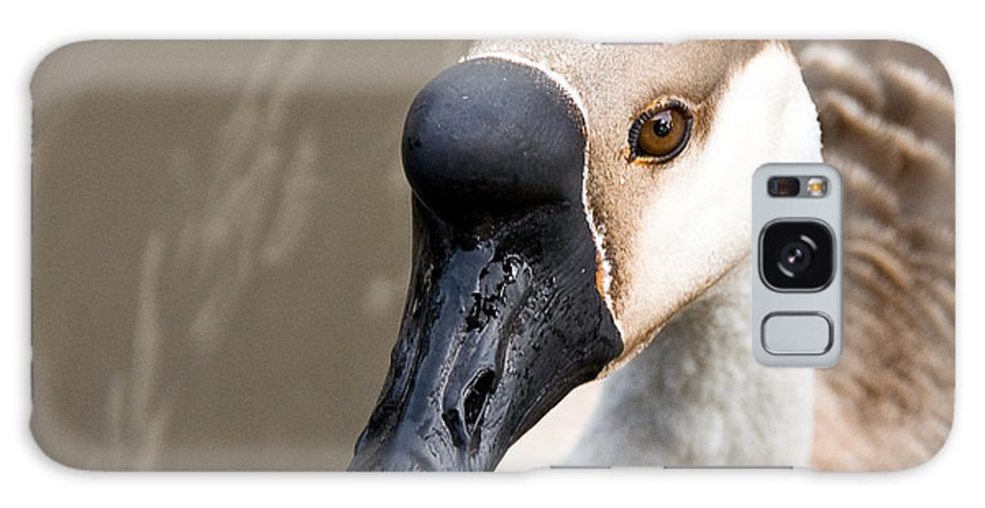 Chinese Brown Goose Galaxy Case featuring the photograph Brown Eye by Christopher Holmes