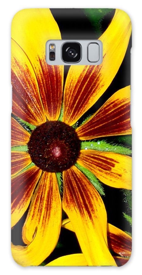 Flower Galaxy S8 Case featuring the photograph Brown Eyed Girls 2 by Debbie May