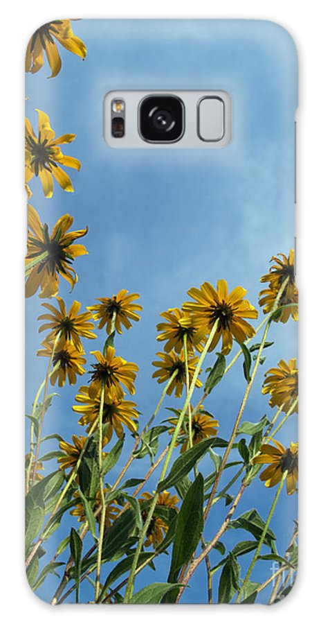 Wildflowers Galaxy Case featuring the photograph Brown-eyed Susans From Below by Anna Lisa Yoder