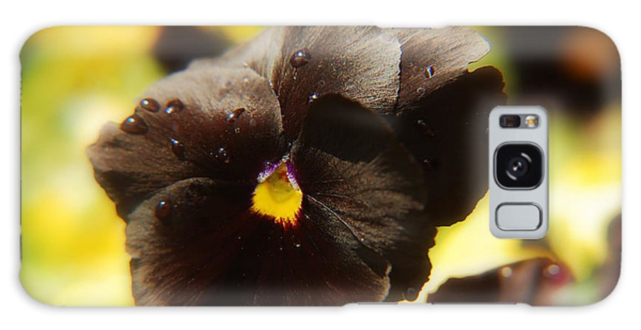 Flower Galaxy S8 Case featuring the photograph Brown Pansy by Elaine Manley