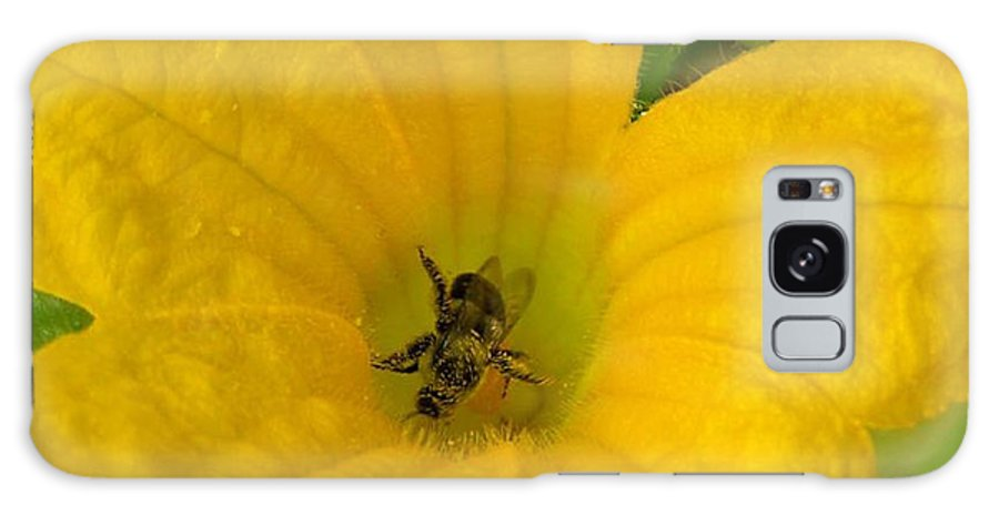 Bee Photography Galaxy S8 Case featuring the photograph Brunch by Evelyn Patrick