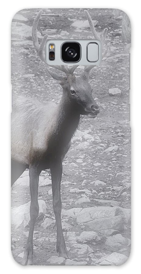 Buck Galaxy S8 Case featuring the photograph Buck In Fog On Hurricane Ridge - Olympic National Forest - Olympic National Park Wa by Christine Till