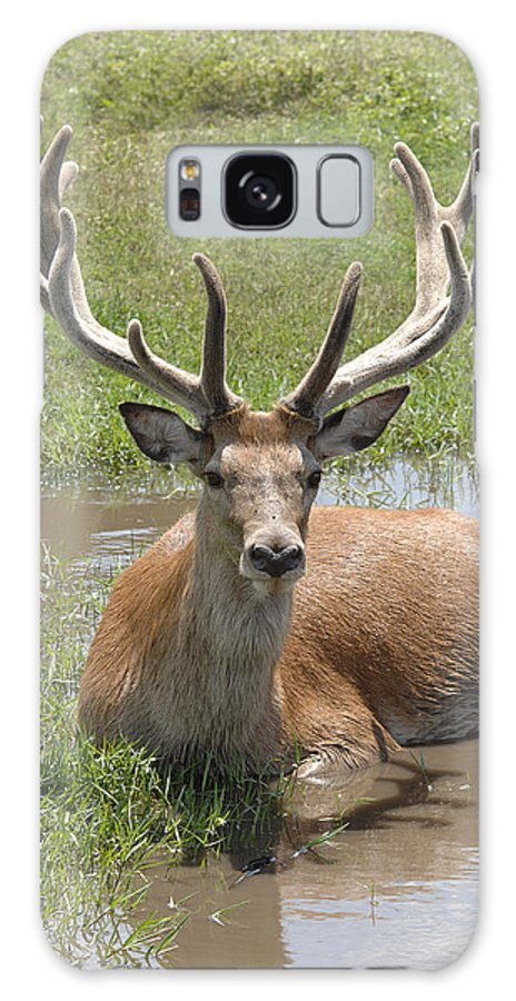 Buck Galaxy S8 Case featuring the photograph Buck by Keith Lovejoy