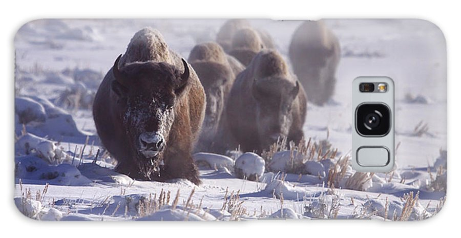 Bos Bison Galaxy S8 Case featuring the photograph Buffalo In The Fog-signed-##6995 by J L Woody Wooden