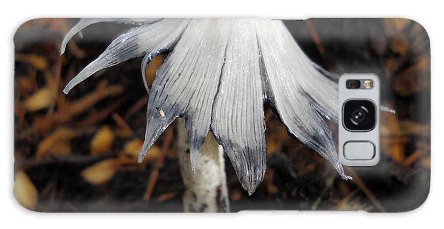 Mushroom Galaxy S8 Case featuring the photograph Bug On A Mushroom by Kent Lorentzen