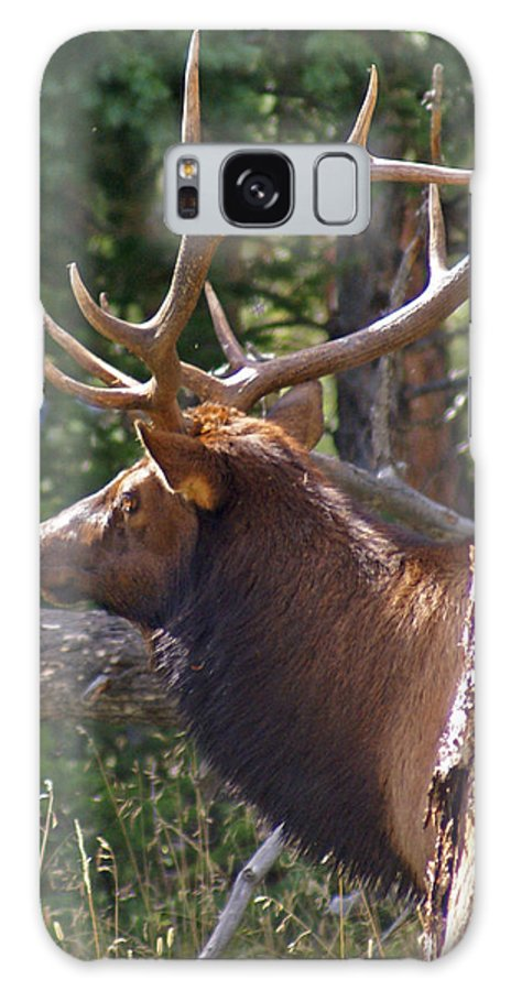 Elk Galaxy S8 Case featuring the photograph Bull Elk 2 by Heather Coen