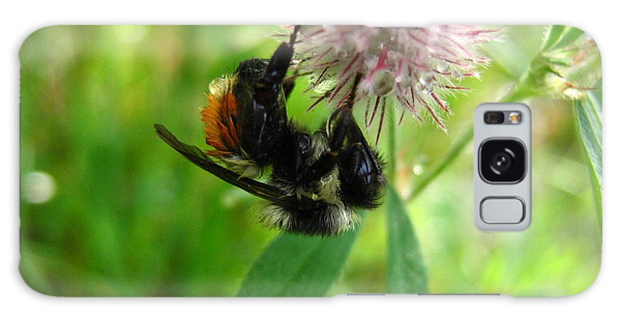 Bee Galaxy Case featuring the photograph Bumble Bee by Melissa Parks