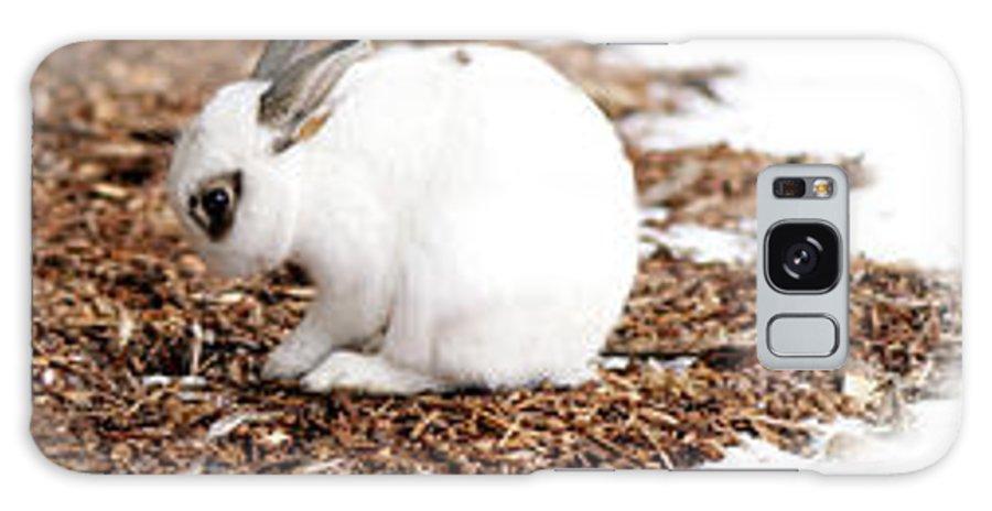 Bunnies Galaxy S8 Case featuring the photograph Bunnies Three by Lisa Knechtel