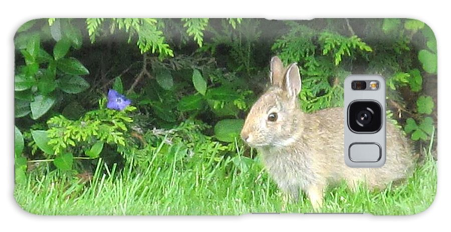 Rabbit Galaxy Case featuring the photograph Bunny In Repose by Ian MacDonald