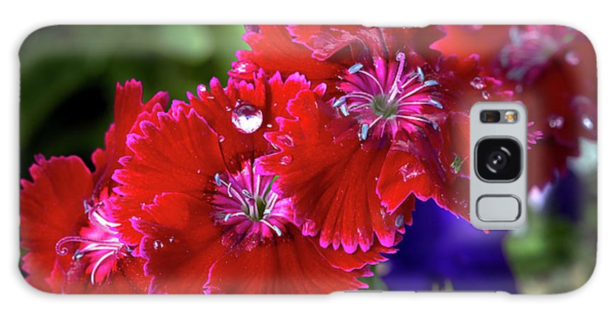 Dianthus Galaxy S8 Case featuring the photograph Burgandy Red Dianthus by Phyllis Denton