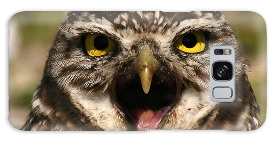 Owl Galaxy S8 Case featuring the photograph Burrowing Owl Eye To Eye by Max Allen