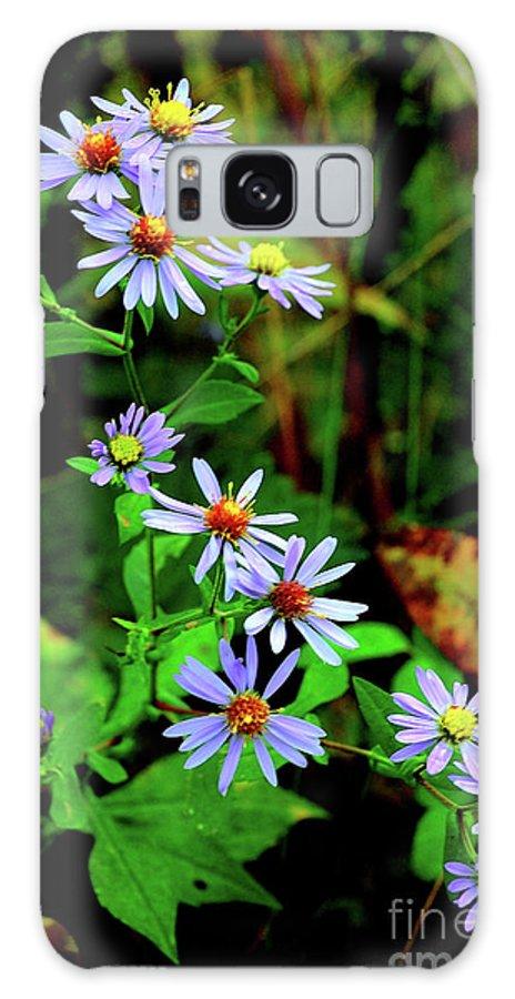 Bushy Aster Galaxy S8 Case featuring the photograph Bushy Aster by Thomas R Fletcher