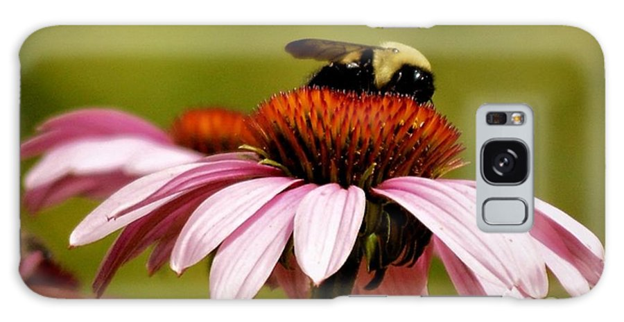 Bees Galaxy S8 Case featuring the photograph Busy As A Bee by Julie Hodgkins