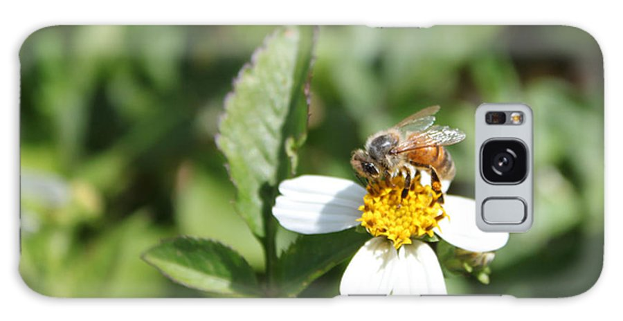Bee Photography Galaxy S8 Case featuring the photograph Busy Bee 2 by Evelyn Patrick