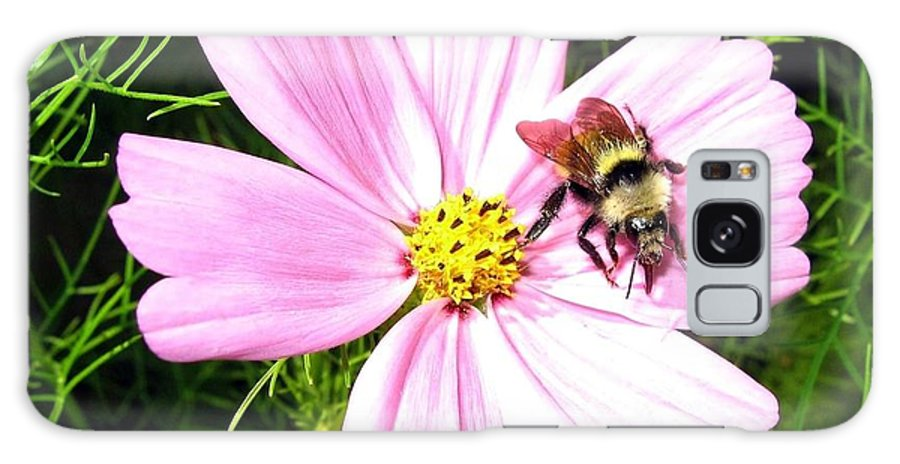 Bee Galaxy S8 Case featuring the photograph Busy Bee by Will Borden