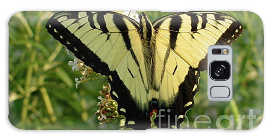 Yellow Galaxy S8 Case featuring the photograph Butterfly 135 by Linda Seacord