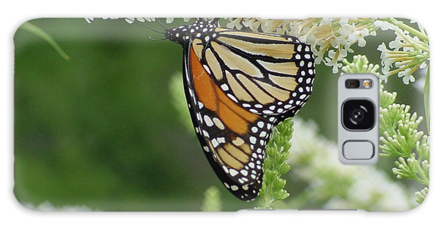 Yellow Galaxy S8 Case featuring the photograph Butterfly 188 by Linda Seacord