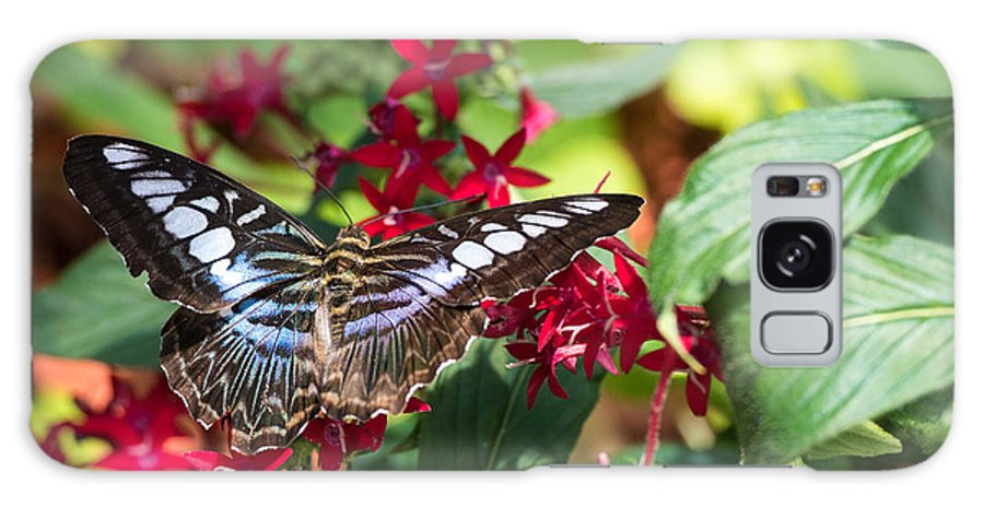 Butterfly Galaxy S8 Case featuring the photograph Butterfly 3 by Wesley Farnsworth