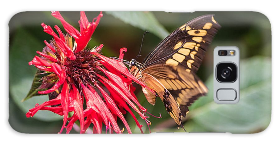 Butterfly Galaxy S8 Case featuring the photograph Butterfly 5 by Wesley Farnsworth