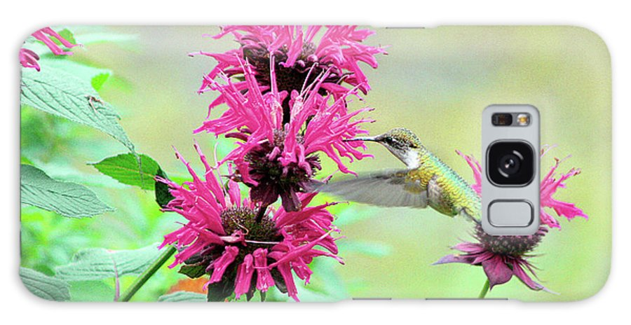 Hummingbird Galaxy S8 Case featuring the photograph Butterfly Garden 25 by Keith Conrey