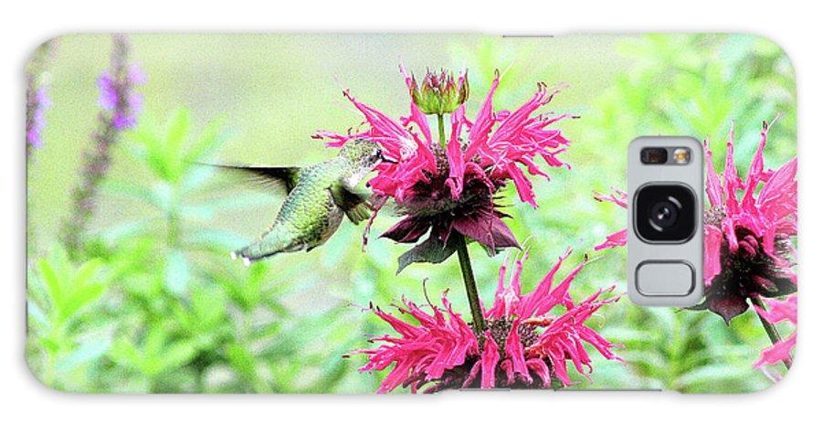 Garden Galaxy S8 Case featuring the photograph Butterfly Garden 5 by Keith Conrey