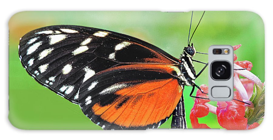 Butterfly Black And Orange Butterfly Galaxy S8 Case featuring the photograph Butterfly Golden Helicon by Regina Geoghan