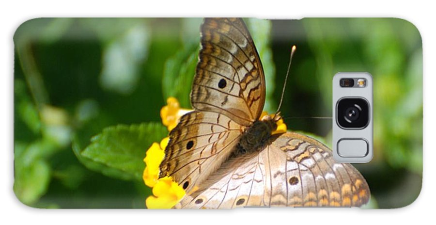 Butterfly Galaxy S8 Case featuring the photograph Butterfly Land by Rob Hans