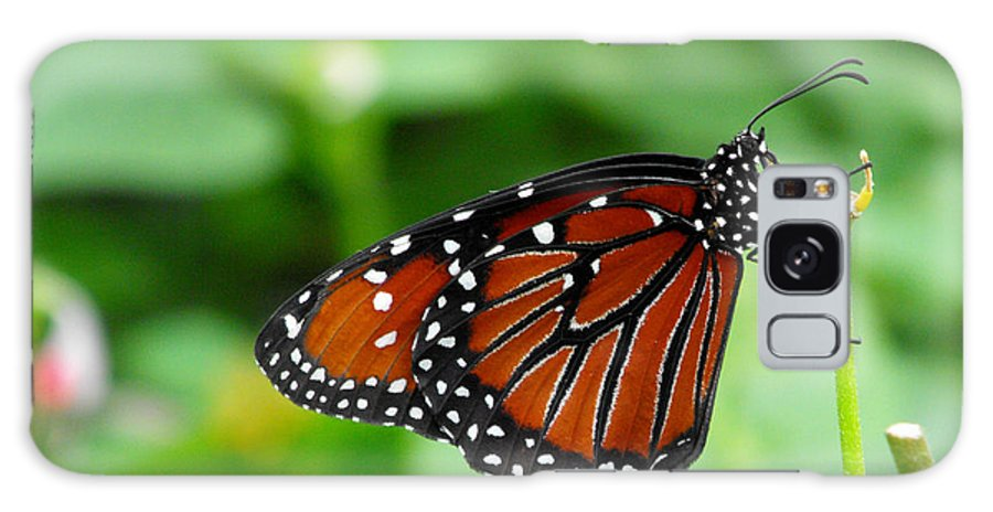 Butterfly Galaxy S8 Case featuring the photograph Butterfly by Nora Martinez