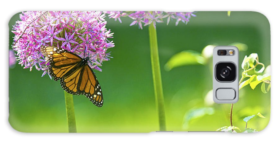 Butterfly Galaxy S8 Case featuring the photograph Butterfly On Flower by Rawimage Photography