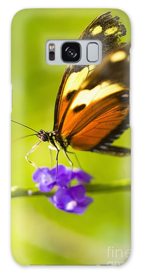 Afternoon Galaxy S8 Case featuring the photograph Butterfly On Flower by Tomas del Amo - Printscapes