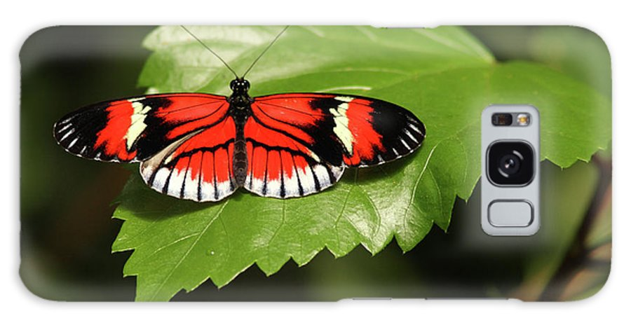 Butterfly Galaxy S8 Case featuring the photograph Butterfly On Large Leaf by Max Allen