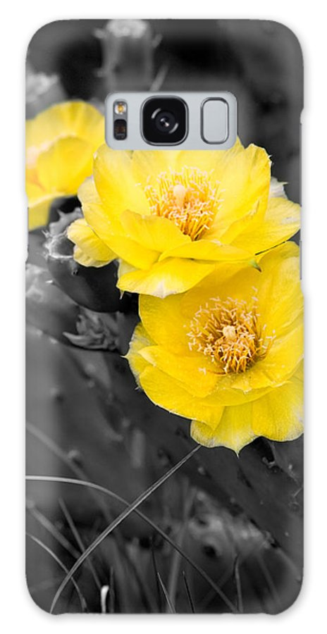 Cactus Galaxy S8 Case featuring the photograph Cactus Blossom by Christopher Holmes