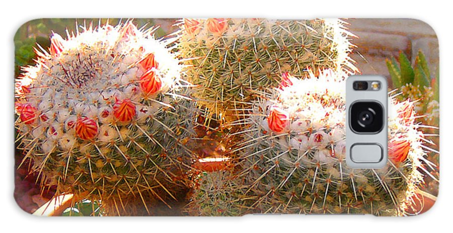 Landscape Galaxy S8 Case featuring the photograph Cactus Buds by Amy Vangsgard