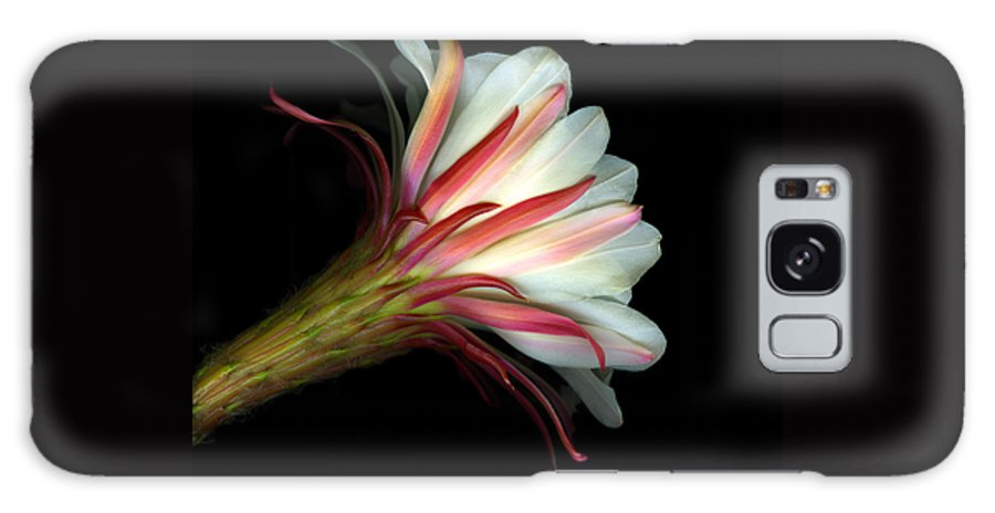 Scanart Galaxy S8 Case featuring the photograph Cactus Flower by Christian Slanec