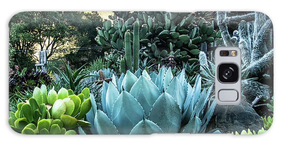 Tina Captured Moments Galaxy S8 Case featuring the photograph Cactus Garden by Tina Hailey