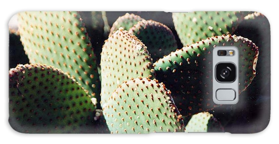 Field Galaxy Case featuring the photograph Cactus by Margaret Fortunato