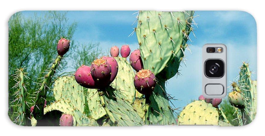 Cactus Galaxy S8 Case featuring the photograph Cactus by Wayne Potrafka