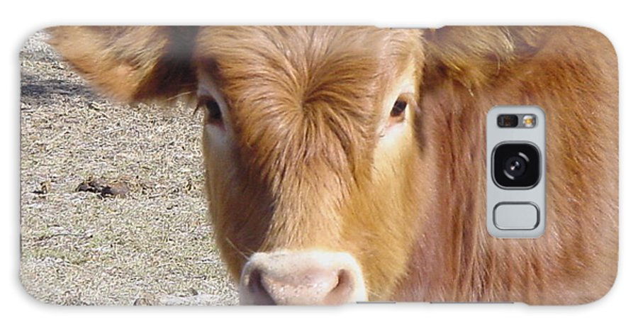 Farm Galaxy S8 Case featuring the painting Calf Smiles by Debbie May