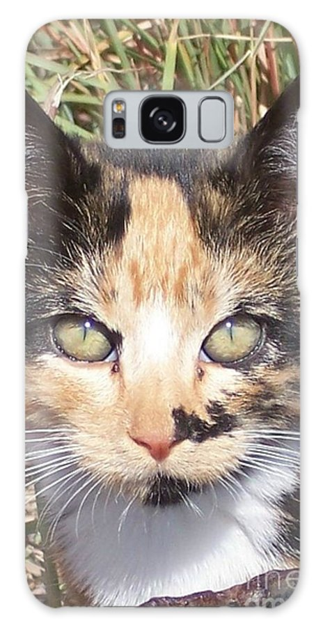Cat Galaxy S8 Case featuring the photograph Calico by Emily Young