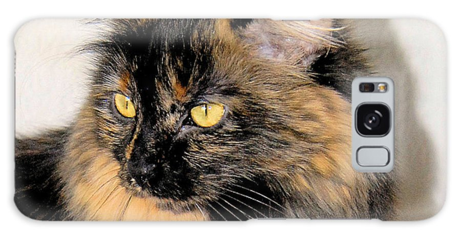 Photo Of A Cat Galaxy S8 Case featuring the photograph Calico Head Study by Cheryl Poland